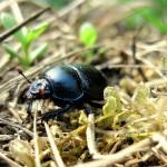 owad-pelzajacy