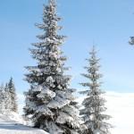 zima-choinka-las-snieg